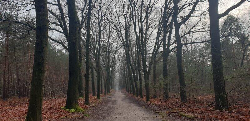 Bos van Schaarsbergen
