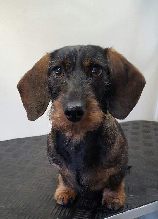 Beautiful dog trimsalon