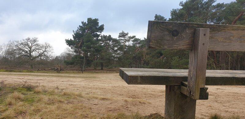 Strubben kniphorstbosch