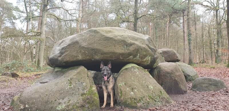 Strubben kniphorstbosch honden