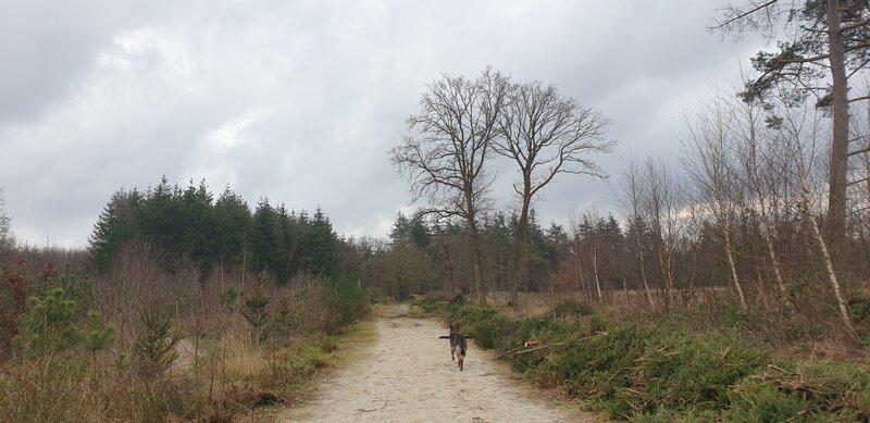 Strubben kniphorstbosch losloopgebied