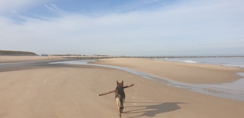 Honden strand Groede