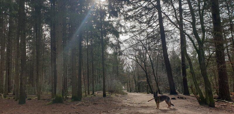 Losloopgebied Amerongse bos