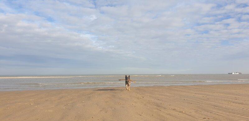 Honden Nieuwvliet