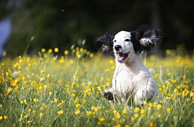 Vrolijke hond