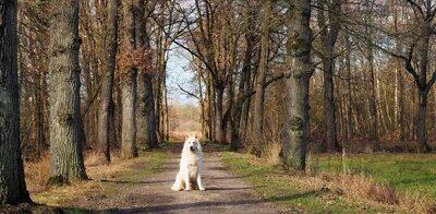 Boerenlandpaden in Groesbeek