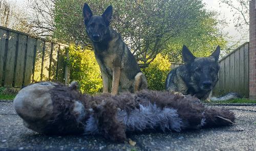 Stevige hondenknuffel
