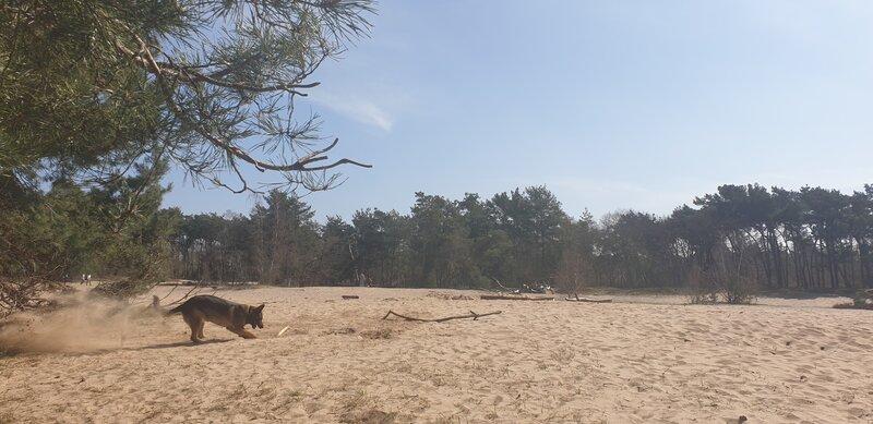 Honden Zandverstuiving Rosmalen