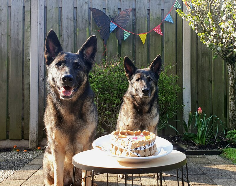 Verjaardag hond