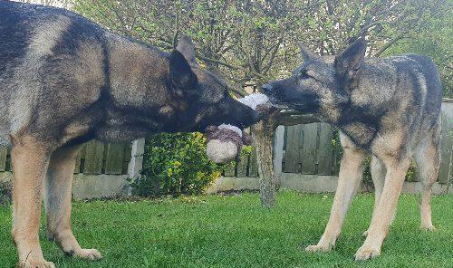 Hufter proof hondenspeelgoed