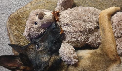 Hond en Knuffelbeer