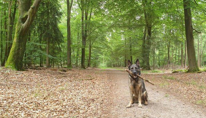 Boswachterij Gees honden