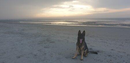 Lana Strand Burgh-Haamstede honden