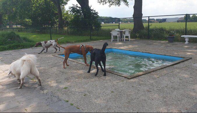 hondenspeeltuin midden drenthe