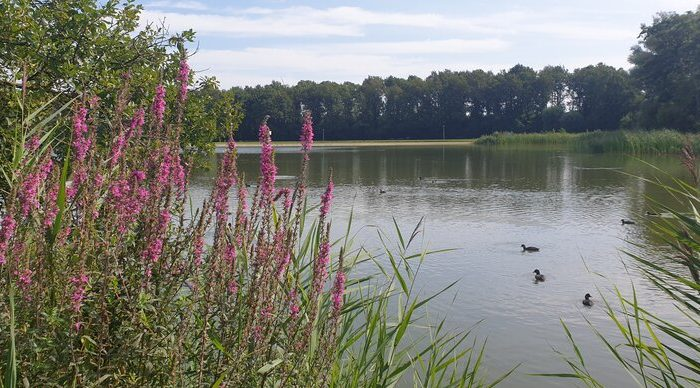 Proostmeer Wagenborgen